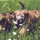 Diverzanta Max in Arco