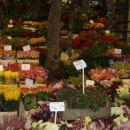Trznica tulipanov v Amsterdamu