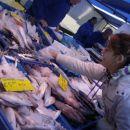 Sobotna trznica v Tilburgu - Laura izbira ribe za vecerjo
