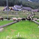 priboljšek za ovce
