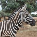 safari park pri fasanu