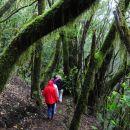 Gozd lovorikovca NP Garajonaj