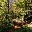 Trnovski gozd se je odel v jesenske barve
