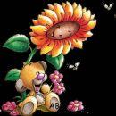 roža velikanka