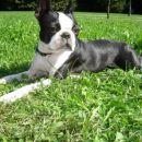 rada poležavam na soncu in travi