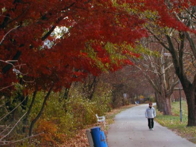 Jesen - foto