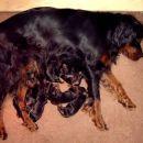 Yarka in mini Damster in njegove sestrice in bratci