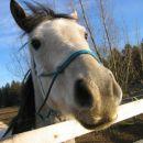 Tud konji so nas pozdravli