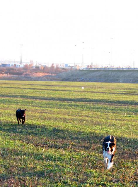 [ walk 29.12. o8 ] - foto