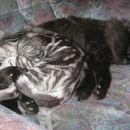 Pičo in maca spijo skupaj ;)