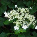 2007-05-19 vrt