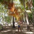 Karibi-Martinique-Vili s palminim listom-moj Rambo