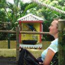 Karibi2006-med papigami