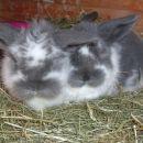 Zajčki - za oddajo