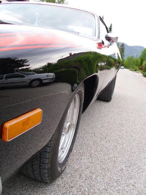 Roadrunner - foto