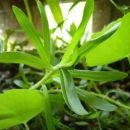 bilje