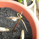 mango 3 dni star