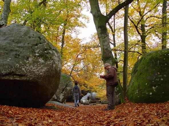 Fontainebleu nov 2007 - foto