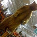 Grizli sredi trgovine