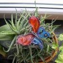 ... po istem navdihu pa še metulja. Oboje je narejeno iz žice in folijskih barv.