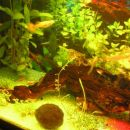 Razvoj akvarija