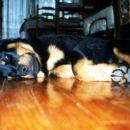 Popoldanski lepotni spanec