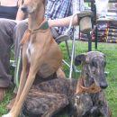 psička azawakh in galga italijanske lastnice na coursingu v slivnici pri mariboru 06