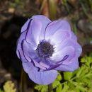 Cvetje pozimi :-)