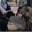 cawboyevo srečanje z Troliko