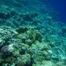 Čudovite korale v Dahabu (najino snorkljanje)