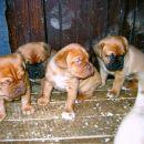 AURORINO prvo leglo, marec 2004