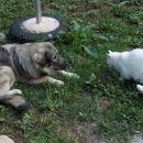 Kato in Charlie prijatelja