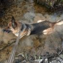 Mara se hladi v vodi ODDANA