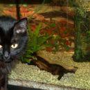 ribice gledam