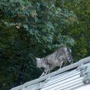 ena na strehi