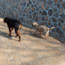 Kato pelje Kano na sprehod