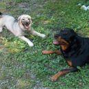 Kato in Kana počivata in se smejita