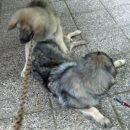 Kato se igra s Čajko