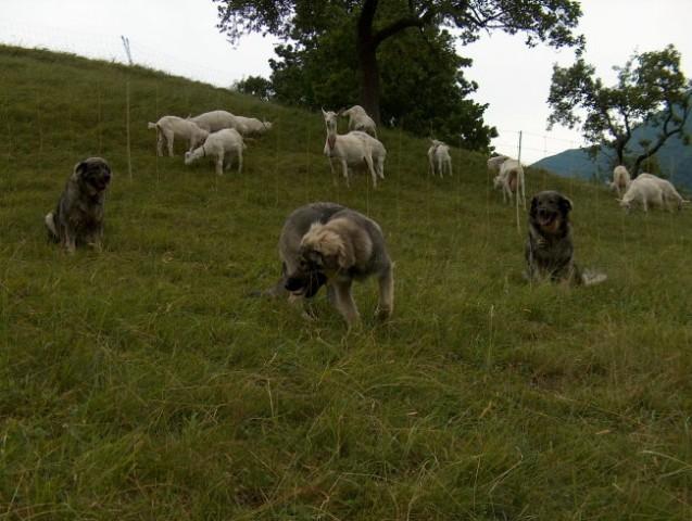 Pižmohtov ranč - foto