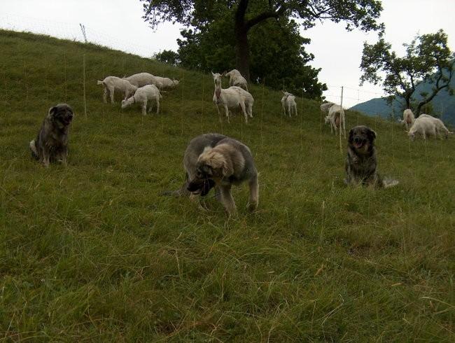 Pižmohtov ranč - foto povečava