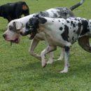 Kato in doge s pridihom rottweilerke