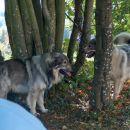 Kato in Čita