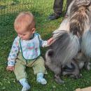 car-lanov podmladek s Čajkinim podmladkom :)